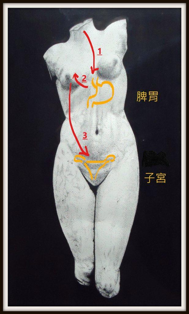 消化系統影響胸部發育